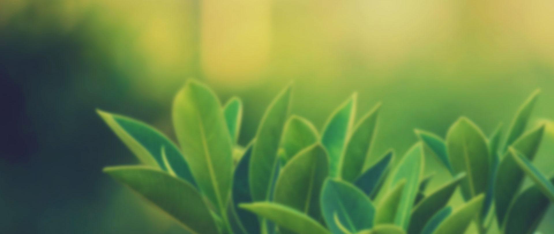 egzamaya-faydalı-gelen-bitkiler