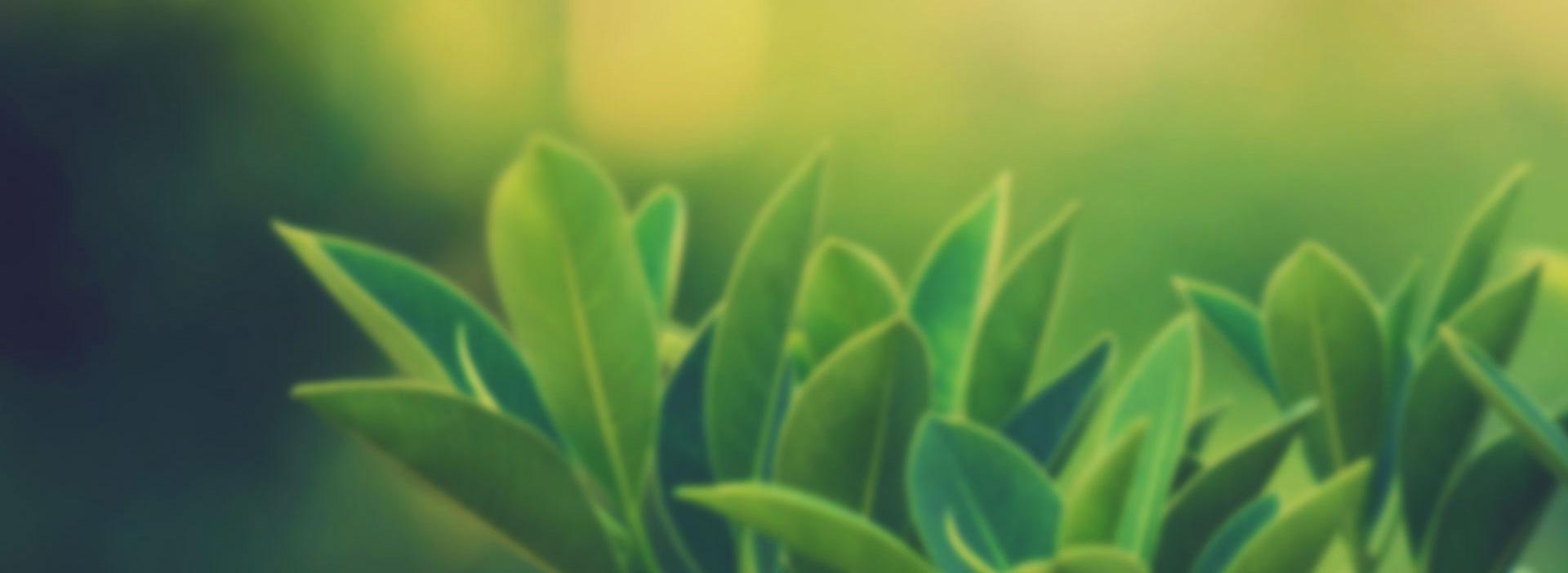 egzamaya-karşı-şifalı-gelen-bitkiler