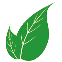 egzamaya-karşı-şifalı-bitkiler